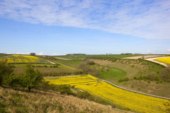 Aerial view of yorkshire agriculture. An aerial view of oilseed rape fields in flower with hedgerows green fields and a small road under a blue cloudy sky in the Stock Photos