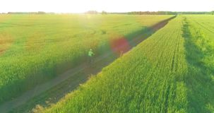 Aerial view on young boy, that rides a bicycle thru a wheat grass field on the old rural road. Sunlight and beams. Aerial view on young boy, that rides a stock video