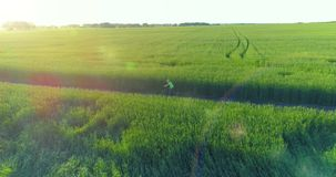 Aerial view on young boy, that rides a bicycle thru a wheat grass field on the old rural road. Sunlight and beams. Aerial view on young boy, that rides a stock video footage