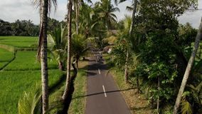 Aerial view of young couple of tourists walking on the road among coconut palms. Bali island. Indonesia stock photography