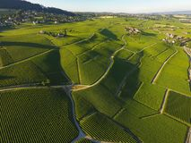 Aerial of Vineyard fields between Lausanne and Geneva, Switzer. Aerial of Vineyard fields between Lausanne and Geneva in Switzerland royalty free stock image