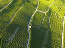 Aerial of Vineyard fields between Lausanne and Geneva, Switzer. Aerial of Vineyard fields between Lausanne and Geneva in Switzerland royalty free stock images