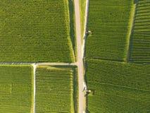 Aerial of Vineyard fields between Lausanne and Geneva, Switzer. Aerial of Vineyard fields between Lausanne and Geneva in Switzerland stock photos