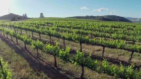 Aerial Vineyard stock footage