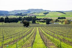 Aerial of vineyards in the Marlborough region in New Zealand royalty free stock photos