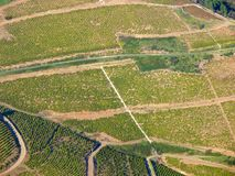 Aerial vinyard view Stock Images