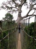 Aerial Walkway at Kakum Royalty Free Stock Images