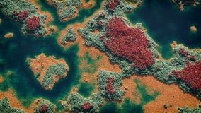 Aerial of wetland with green red and yellow vegetation. Stock Images