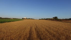 Aerial from a wheat field in Portugal stock video footage