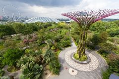 Aerial, wide angle view of the Supertree Grove at Gardens by the Bay with the Singapore Flyer in the background stock photo