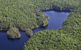 Aerial wild forest Stock Images