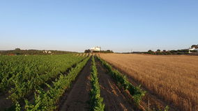 Aerial from a wine and wheat field in Portugal stock video footage