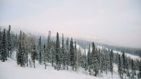 AERIAL: Winter forest. Winter in mountains. AERIAL: Snowy forest Winter in mountains stock video