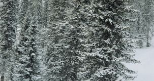 Aerial: Winter forest. Winter in mountains. Aerial: Snowy forest Winter in mountains stock footage