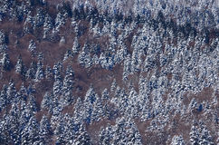 Aerial winter pine forest Royalty Free Stock Photography