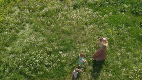 Aerial: Young blonde hippie mother having quality time walking and running with her baby girls at a park dandelion field. Aerial: Young blonde hippie mother stock footage