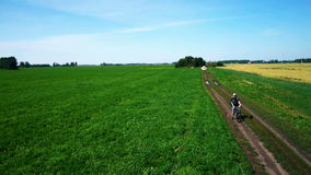 AERIAL: Young man cycling on bicycle at rural road through green and yellow field. stock video