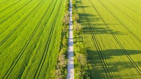 Aeriala-Ansicht des grünen Weizenfeldes und des sonnigen Tages Stockfotos