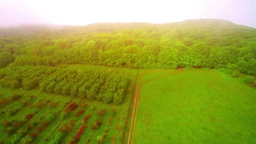 Aerisl flying over the fabulous garden of fruit trees. Apple and pear covered with a light mist on the background of. Bright sun stock footage