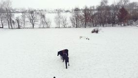 Aero, τοπ άποψη, χειμώνας, με ειδικές ανάγκες άτομο που περπατά κατά μήκος του χιονώδους τομέα έχει την πρόσθεση αντί του σωστού  απόθεμα βίντεο