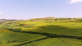 Aero, beautiful summer landscape, green blooming sunflower fields under a blue cloudless sky. Transylvania, Romania. stock video