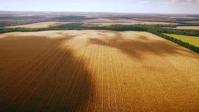 Aero : cloudy sky over golden field of corn - aerial photo stock video