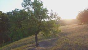 Aero Flight near the alone tree on sunset.  stock video footage