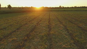 Aero Flight over the clear field in sunset stock footage
