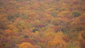 Aero- tiroteo del otoño colorido increíble Tops de los árboles de diversos colores almacen de video