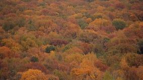 Aero- tiroteo del otoño colorido increíble Tops de los árboles de diversos colores almacen de metraje de vídeo