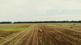 Aero video filming. a large field of mown wheat, after harvesting. many sheaves, large bales of straw. day summer stock video