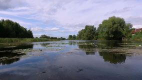 Aero video recording. Summer, in the afternoon, the river landscape with water lilies. around there are the trees, reeds stock video