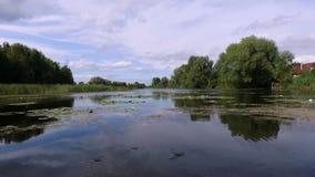 Aero videoopname De zomer, in de middag, het rivierlandschap met waterlelies rond zijn er de bomen, riet stock video