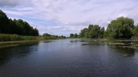 Aero videoopname De zomer, in de middag, het rivierlandschap met waterlelies rond zijn er de bomen, riet stock footage