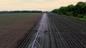 Aero view from above, potatoes grow on field, irrigated by a special watering pivot sprinkler system. it waters small. Green bushes of potatoes planted in rows stock video footage