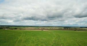 Aero view from drone in field of colza Brassica napus in sunny day.  stock video