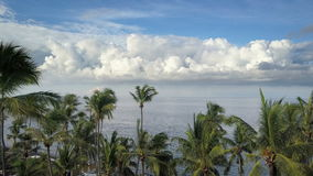 Aero view from drone on sea and beach on which palm trees of Bali Indonesia stock video