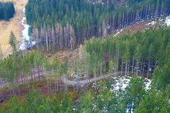 Aero- visión en los árboles altos en las colinas de la montaña Imagenes de archivo