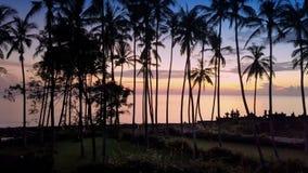Aero widok od trutnia świt słońce nad morzem przez drzewek palmowych na plaży, Bali, Indonezja, zbiory wideo