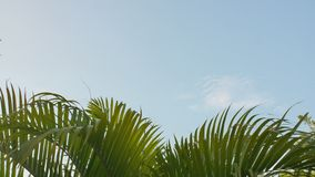Aeroplano que saca contra la perspectiva de la palma colgante de las ramas de árbol en Indonesia metrajes