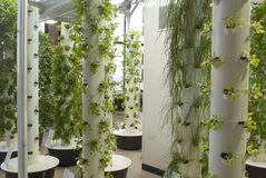 Aeroponic Garden Royalty Free Stock Images