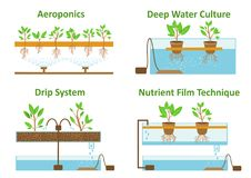 Aeroponic and hydroponic growth systems. Set of aeroponic and hydroponic plant growth systems.Color vector illustration Stock Photography
