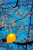 Aerostato giallo Immagine Stock Libera da Diritti