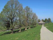 aeschiried在结构树附近 库存图片