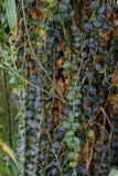 Aeschynanthus-Baumstamm und tropischer Baum des Blattes Lizenzfreie Stockfotos