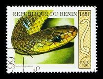Aesculapian Schlange (Elaphe longissima), Schlangen serie, circa 1999 Lizenzfreie Stockfotografie