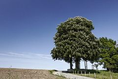 Horse Chestnut in May, Germany, Europe Royalty Free Stock Photos