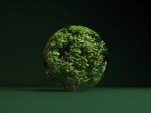 Aesculus hippocastanum Sphere Spring Stock Images