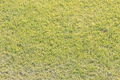 Aewdrop auf dem Rasen am hellen Morgen und am wirklichen grünen Gras b Stockbild