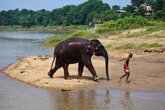 река человека отсутствующего слона af glistening ведущее Стоковые Фотографии RF